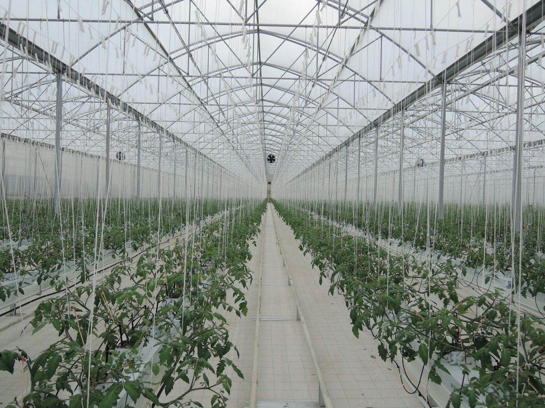 Aspetti tecnici per la gestione delle coltivazioni